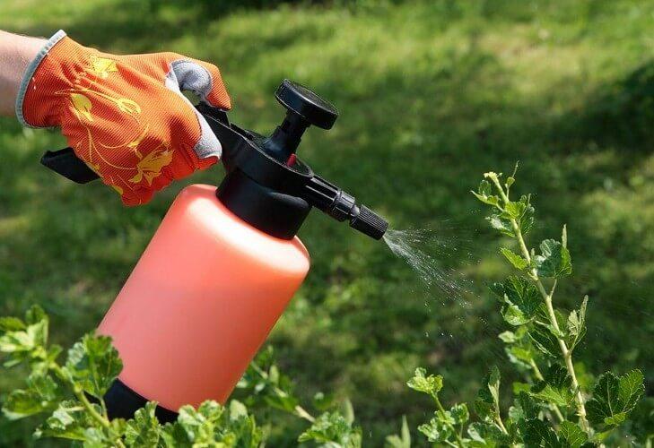обработка листьев от насекомых