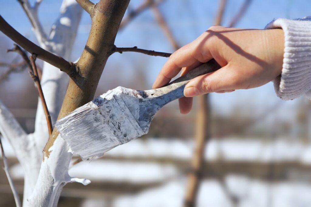 побелка деревьев в марте