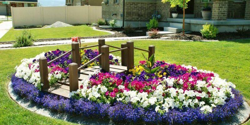 багаторічні квіти для клумби