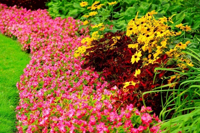 планування клумби з багаторічних квітів