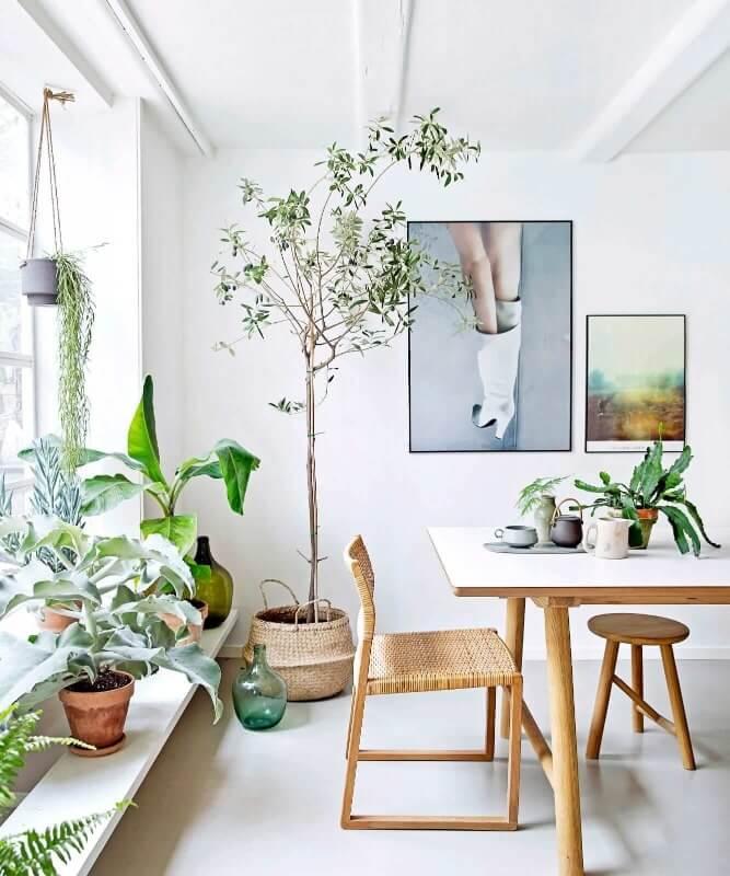 рослини в вітальні