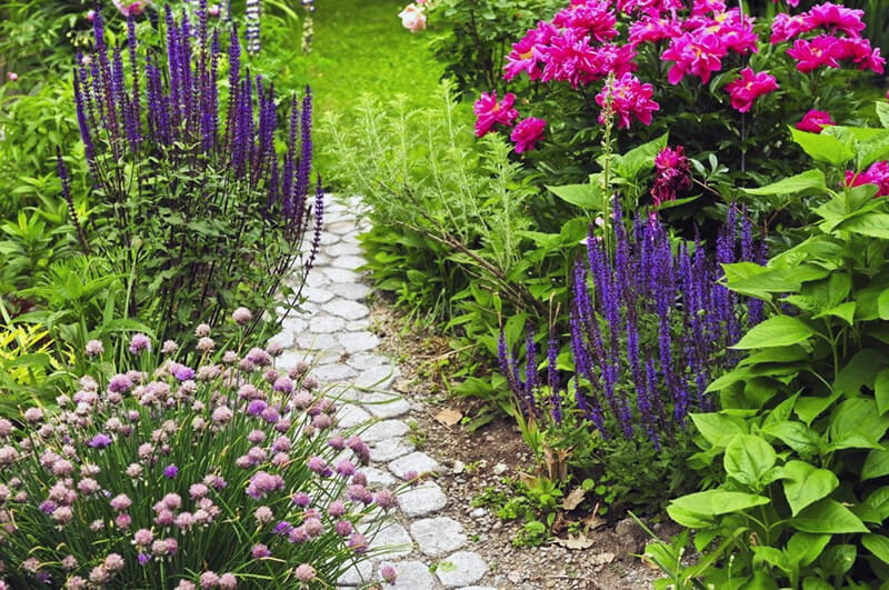 Многолетние растения для ландшафтного дизайна в Голландском стиле