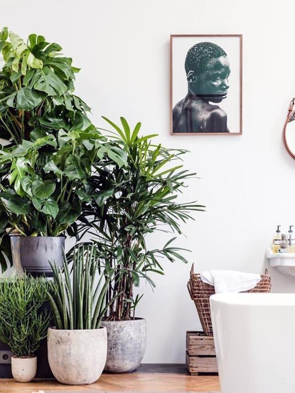 Озеленение квартиры или дома