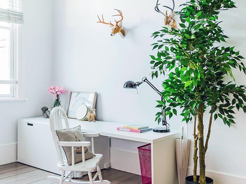 Растения в квартире для создания уюта