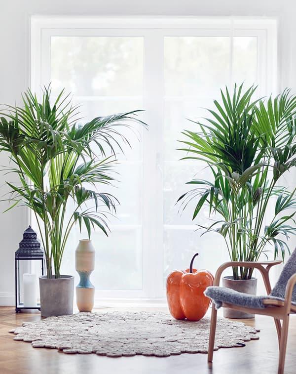 Создание уюта с помощью растений