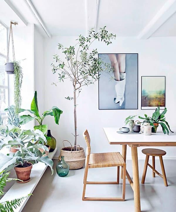 Создание уюта в квартире с помощью растений