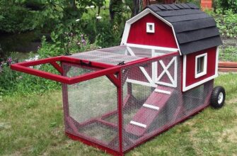 Як побудувати курник