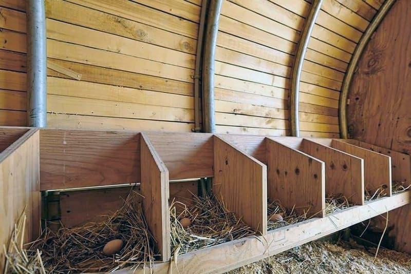 Обустройство гнезд в курятнике