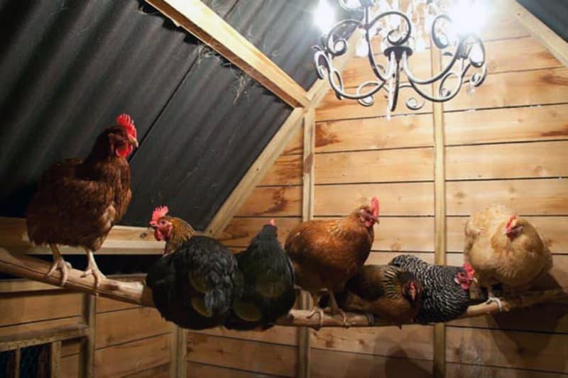 Облаштування освітлення в курнику