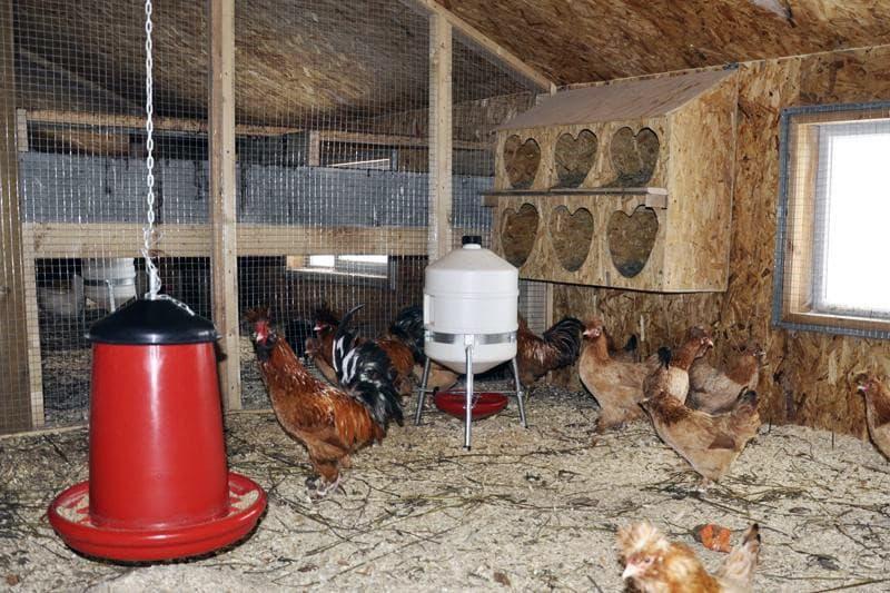 Підвісні годівниці в курнику
