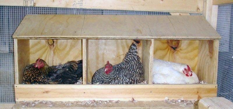 Пример гнезд для кур в курятнике