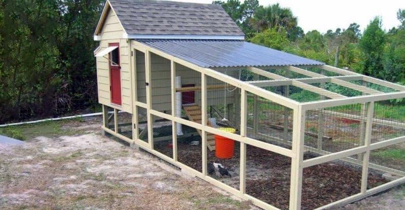 Будівництво курника з територією для вигулу