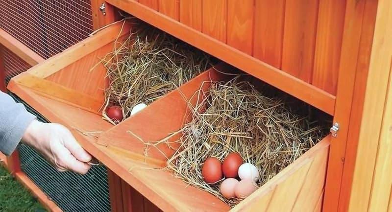 Внешние гнезда для курятника
